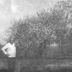 Шестово яблони в цвету